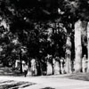 """""""Cedar Avenue W.S. NC"""""""