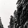 """""""Snow Scene, Cedar Avenue"""""""