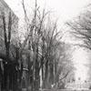 """Main Street, Salem NC"""