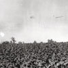 """Tobacco Field, Winston NC"""