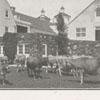 Reynolda Dairy Farm, 1918.