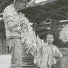 Unloading tobacco at the tobacco market, 1962.