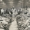 Tobacco market and warehouse, 1962.