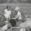 Taking a water break from picking green beans, 1960.
