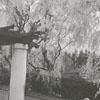 Gail Lineback and Betty Dancy in Reynolda Gardens, 1955.