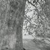 Abram Allen homeplace in Davie County, 1942.
