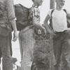 Boy Scouts from Troop 104, 1958.