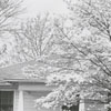 House at 2335 Elizabeth Avenue, 1956.