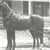 Horse and buggy with a driver, in front of Dr. Henry H. Kapp's house at 644 Holly Avenue.