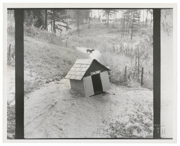 Flood waters on Janita Drive, 1959.