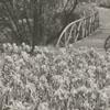 Runnymede Iris Gardens