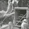 Fishel family threshing oats and barley on their farm, 1971.
