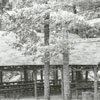 Construction of Reynolds Park picnic area and shelters, 1939.