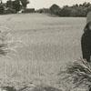 Annie Mae Gordon and Ruby Gordon harvesting wheat, 1939.