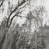 Mrs. Jean (William R.) Lybrook at Tanglewood Farm, 1948.