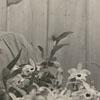 Frank Lustig, 1951. Frank was the gardener at Tanglewood Park.