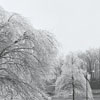 Ice storm hits Winston-Salem and damages trees throughout the city, 1967