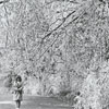 Ice storm hits Winston-Salem and damages trees throughout the city, 1967. Photo shows Reynolda Gardens.
