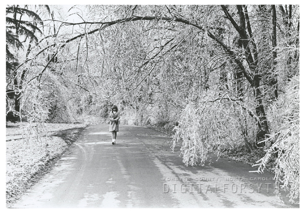 Ice Storm Hits Winston Salem And Damages Trees Throughout The City, 1967.  Photo Shows Reynolda Gardens.