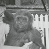 Mae Noell and Tarpie, the gorilla, 1967.