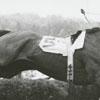 Tanglewood Steeplechase, 1964.