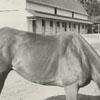 Henry Lewis III with a quarterhorse, 1963.